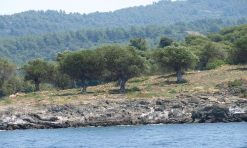 Zdjęcie GRECJA / chalkidiki / sithonia / widok ze statku