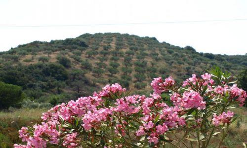 Zdjęcie GRECJA / Chalkidiki / sithonia / trochę koloru ...