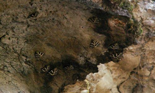 Zdjecie GRECJA / Rodos / Dolina Motyli / Motyle... w Dolinie Motyli