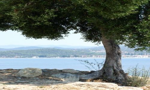 Zdjęcie GRECJA / Chalkidiki / sithonia / samotnie