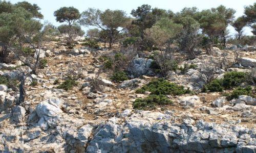 Zdjęcie GRECJA / Chalkidiki / sithonia / jak one rosną