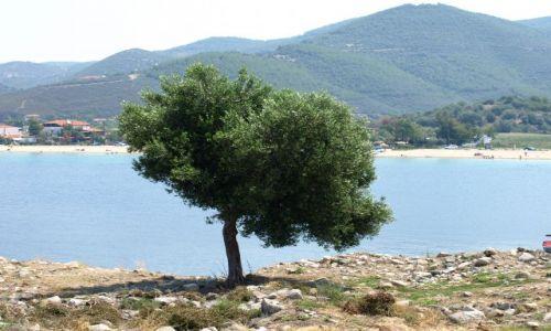 Zdjęcie GRECJA / Chalkidiki / sithonia / a ja tu jeszcze postoję