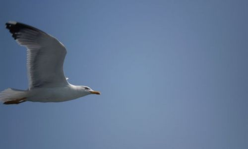 Zdjęcie GRECJA / Sithonia / Ouranoupoli / Podróznik