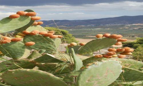 Zdjecie GRECJA / Kreta / Kreta / rozkwitały pąki ....kaktusów
