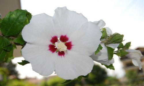 Zdjecie GRECJA / brak / Kalambaka / kwiatuszek