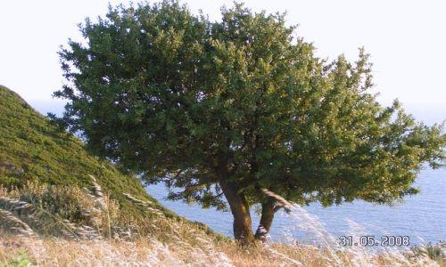Zdjecie GRECJA / Korfu / Afionas / samotność