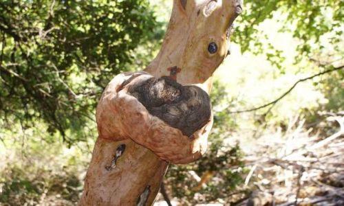 Zdjecie GRECJA / rodos / brak / drzewko :D