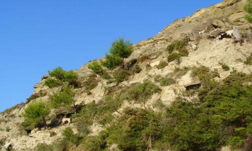 Zdjecie GRECJA / Rodos / droga Kolimbia-Archipoli / Gdzie diabeł nie może tam kozę pośle