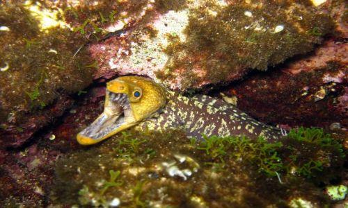 Zdjecie GRECJA / morze jonskie / zatoka podwodnych jaskin / wstep wzbroniony