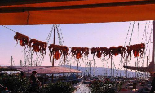Zdjęcie GRECJA / Morze Egejskie / Wyspy Sarońskie - Hydra / Ośmiornice
