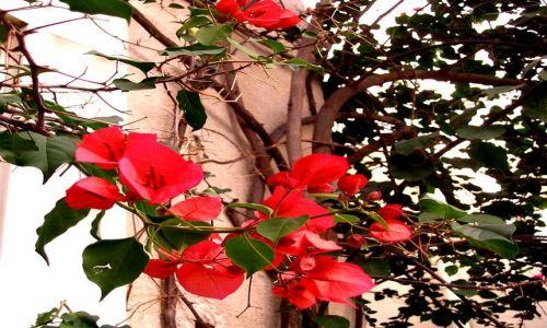 Zdjęcie GRECJA / Peloponez / Nafplion / październikowe kwiaty Grecji