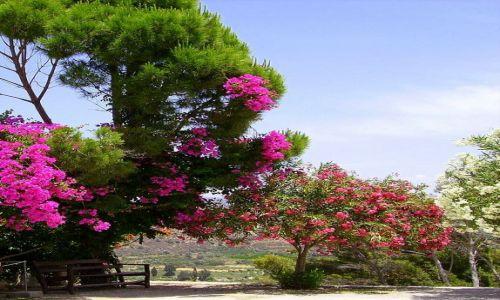 Zdjęcie GRECJA / wyspa Kreta / Kreta / piekna flora na Krecie