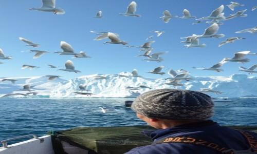 Zdjecie GRENLANDIA / Qaasuitsup / Ilulissat / Szukając sieci
