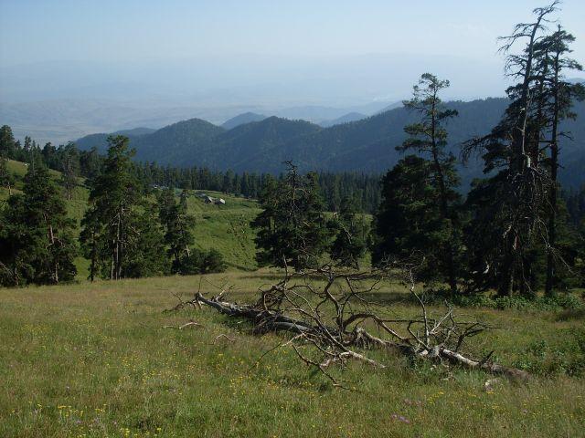 Zdjęcia: północny-zachód od Atskuri (Atskuri w połowie drogi pomiędzy Borżomi a Akhaltsikhe), Park Narodowy Borżomi-Karaguli, ... nie wszysko pnie się..., GRUZJA