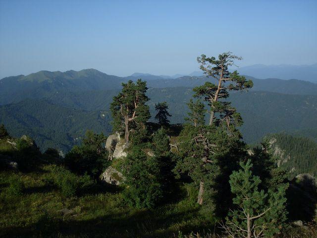 Zdjęcia: północny-zachód od Atskuri (Atskuri w połowie drogi pomiędzy Borżomi a Akhaltsikhe), Park Narodowy Borżomi-Karaguli, wichrowe wzgórza..., GRUZJA