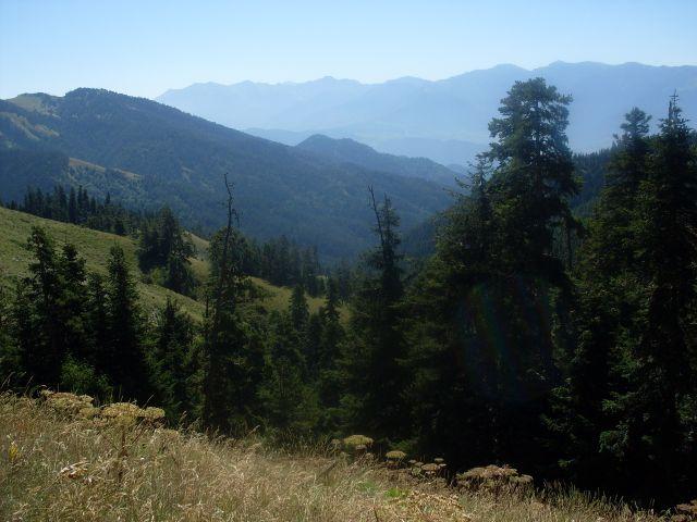 Zdjęcia: północny-zachód od Atskuri (Atskuri w połowie drogi pomiędzy Borżomi a Akhaltsikhe), Park Narodowy Borżomi-Karaguli, ... powolne zejście..., GRUZJA