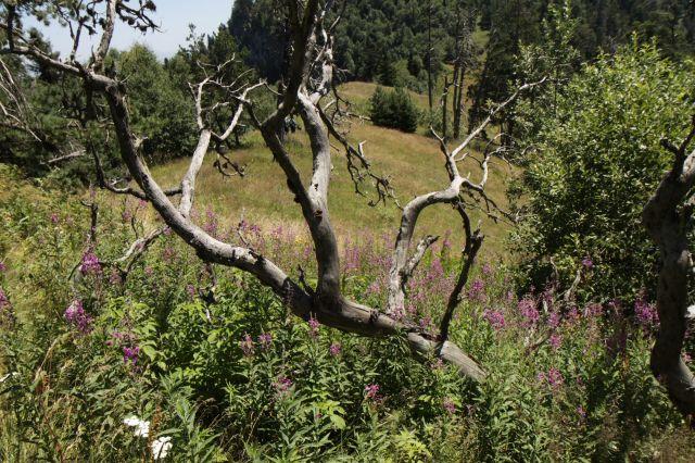 Zdjęcia: Borjomi-Karagauli, Kartlia Wewnętrzna, Park Narodowy, GRUZJA