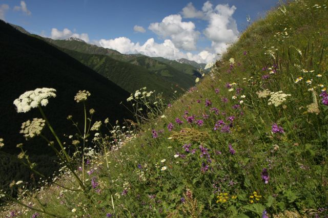 Zdjęcia: treking Mestia-Ushguli, Megrelia/Górna Svanetia, Łąki Svanetii, GRUZJA