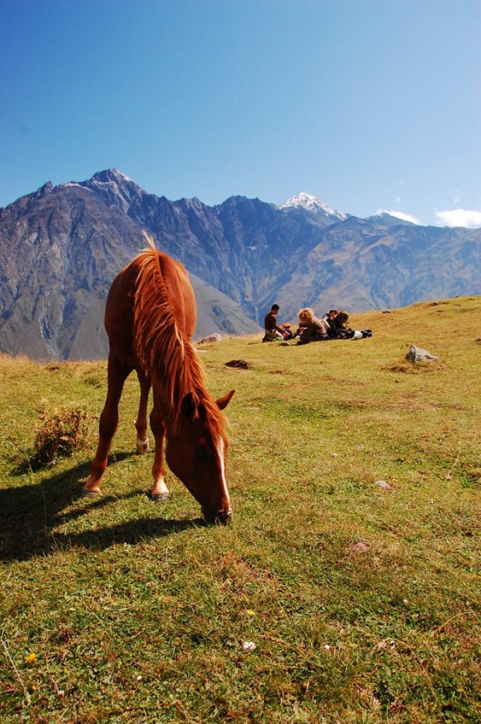 Zdjęcia: Kazbek, Gruzja, Konkurs - tam wrócę, gdzie spotkać można dzikie konie, GRUZJA