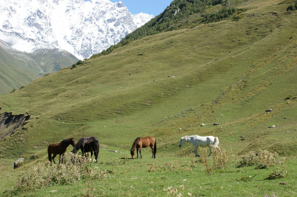 Zdjęcia: Swanetia, Konie , GRUZJA