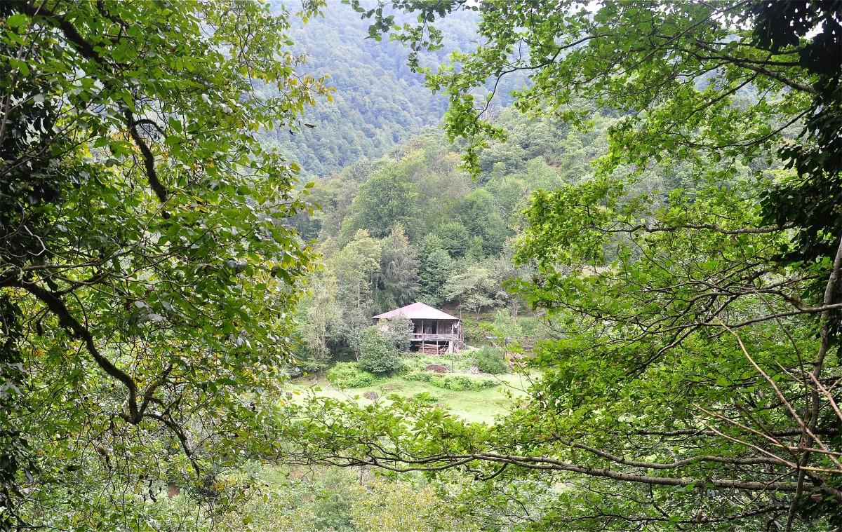 Zdjęcia: Park Narodowy Mtirala, Adżaria, W Parku Narodowym Mtirala, GRUZJA