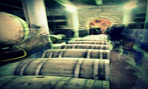 Zdjecie GRUZJA / Kachetia / fabryka wina / duchy w fabryce wina