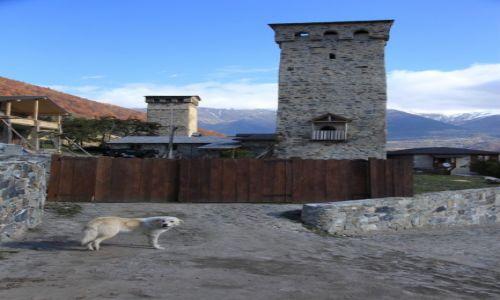 Zdjecie GRUZJA / Svanetia / Mestia / Na straży