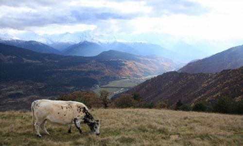 Zdjecie GRUZJA / Svanetia / Kaukaz / Na kaukaskim pastwisku