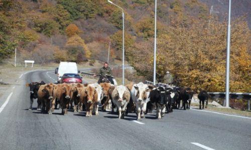 Zdjecie GRUZJA / Mccheta-Mtianetia / Gruzja / Georgian Traffic