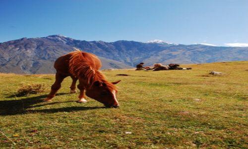 Zdjecie GRUZJA / Gruzja / Kazbek / Konkurs - tam wrócę, gdzie spotkać można dzikie konie