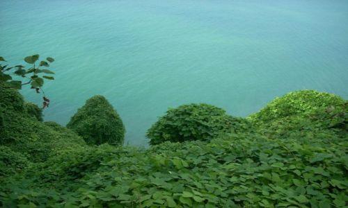 Zdjecie GRUZJA / Adżaria / Batumi / Widok z ogrodu botanicznego na Morze Czarne