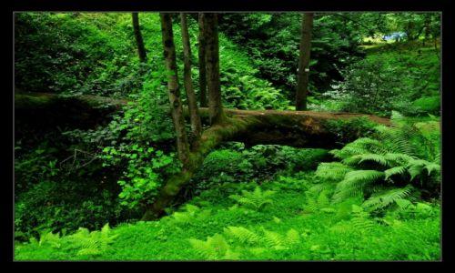 Zdjecie GRUZJA / Batumi / Batumi / Dżungla