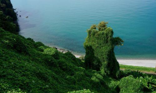 Zdjęcie GRUZJA / Batumi / Batumi / Ogród Botaniczny