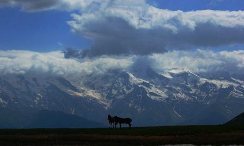 Zdjecie GRUZJA / Swaneti / Mestia / Gory i konie