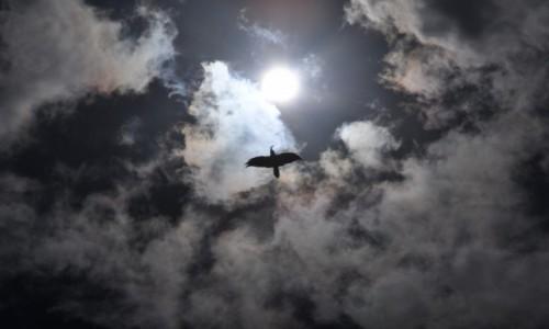 Zdjęcie GRUZJA / Tuszetia / Omalo / Udane polowanie - w drodze do Omalo