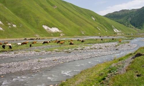 Zdjęcie GRUZJA / GDW / Dolina Truso / Pastwisko w strumieniu