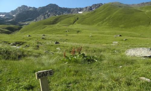 Zdjecie GRUZJA / Mccheta-Mtianetia / okolice Chaukhi Pass / może kawusię?
