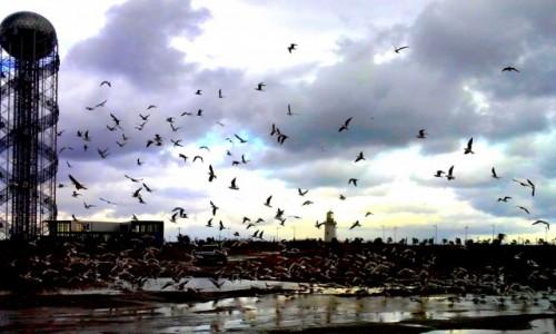GRUZJA / Adżaria / Batumi / Ptaki jak u Hitchcocka