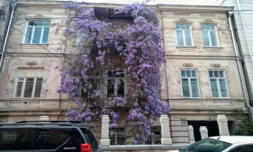 Zdjecie GRUZJA / Tbilisi / Tbilisi / Tbilisi