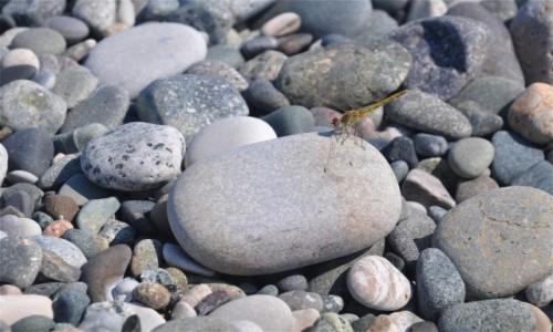 GRUZJA / Adżaria / Gonio / Ważka na plaży