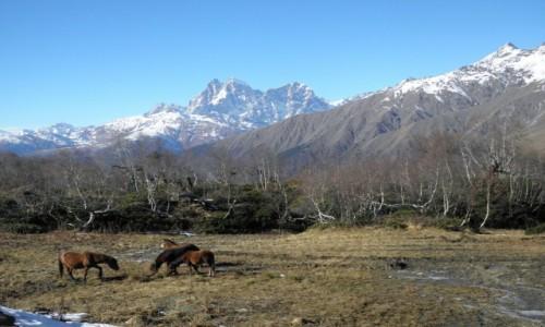Zdjecie GRUZJA / Swanetia / Swanetia / kaukaskie olbrzymy