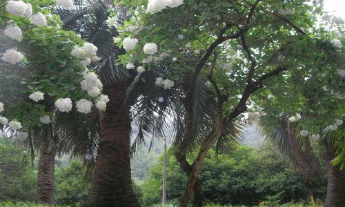 Zdjecie GRUZJA / brak / Batumi (ogr�d botaniczny) / Batumi w deszcz