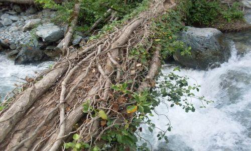Zdjęcie GRUZJA / Kachetia, przy granicy z Dagestanem / Park Narodowy Lagodechi / w świecie Tarzana?