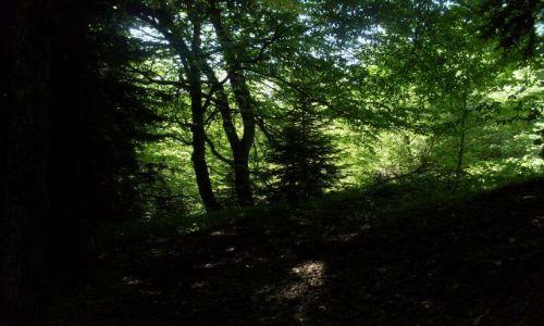 Zdjęcie GRUZJA / Park Narodowy Borżomi-Karaguli / północny-zachód od Atskuri (Atskuri w połowie drogi pomiędzy Borżomi a Akhaltsikhe) / ...pod lisciastym baldachimem....