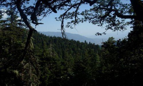 Zdjęcie GRUZJA / Park Narodowy Borżomi-Karaguli / północny-zachód od Atskuri (Atskuri w połowie drogi pomiędzy Borżomi a Akhaltsikhe) / ... im dalej w las, tym więcej...