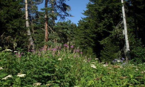 Zdjęcie GRUZJA / Park Narodowy Borżomi-Karaguli / północny-zachód od Atskuri (Atskuri w połowie drogi pomiędzy Borżomi a Akhaltsikhe) / ... pachnąca zapora....