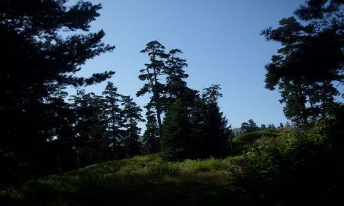 Zdjęcie GRUZJA / Park Narodowy Borżomi-Karaguli / północny-zachód od Atskuri (Atskuri w połowie drogi pomiędzy Borżomi a Akhaltsikhe) / ... tu kończy się zwarta ściana lasu...
