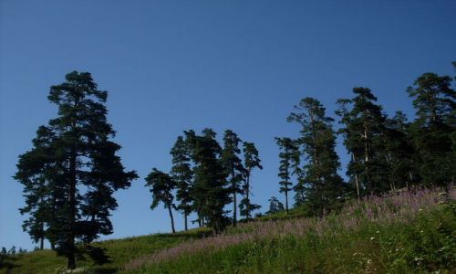 Zdjęcie GRUZJA / Park Narodowy Borżomi-Karaguli / północny-zachód od Atskuri (Atskuri w połowie drogi pomiędzy Borżomi a Akhaltsikhe) / ... łąki górą :-)...