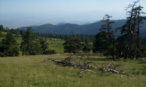 Zdjęcie GRUZJA / Park Narodowy Borżomi-Karaguli / północny-zachód od Atskuri (Atskuri w połowie drogi pomiędzy Borżomi a Akhaltsikhe) / ... nie wszysko pnie się...
