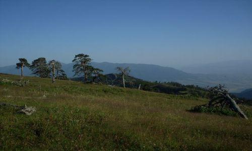 GRUZJA / Park Narodowy Borżomi-Karaguli / północny-zachód od Atskuri (Atskuri w połowie drogi pomiędzy Borżomi a Akhaltsikhe) / wspinaczka drzew?